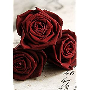 Preserved Roses 2.5in Red Burgundy (6 Roses) - Excellent Home Decor - Indoor & Outdoor 93