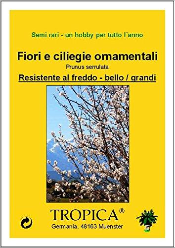 Ciliegio giapponese ornamentale TROPICA Prunus serulata - 30 Semi- Resistente al freddo