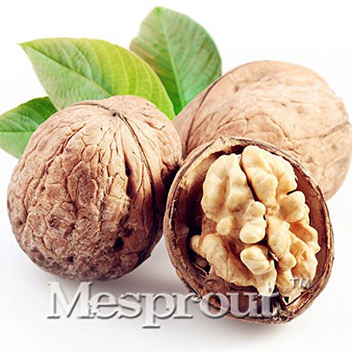 Walnut Autumn (1 Seeds Green Walnut Seed Very Delicious Walnut Seed Very #32689402477ST)