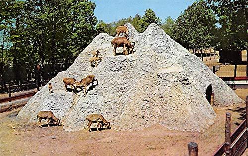 Zoos Deer Forest Animal Farm, Paw Paw Lake Coloma, Michigan, USA Unused