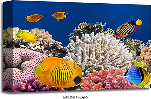 Barewalls Masked Butterfly Fish (Chaetodon Semilarvatus) and Coral Reef Gallery Wrapped Canvas Art (12in. x 18in.) ()