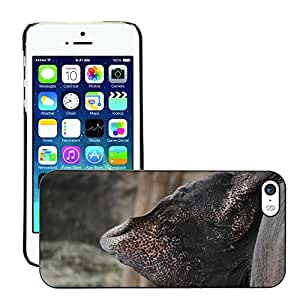 GoGoMobile Slim Protector Hard Shell Cover Case // M00117792 Elephant Ear Nature Large Big // Apple iPhone 5 5S 5G