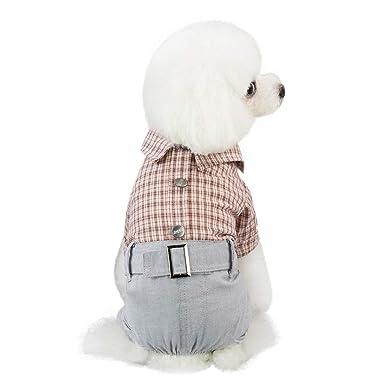 Geilisungren Mascotas Ropa Perros pequeños Verano Camiseta ...