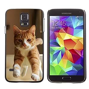 TopCaseStore / la caja del caucho duro de la cubierta de protección de la piel - Orange Cat American British Shorthair - Samsung Galaxy S5 SM-G900
