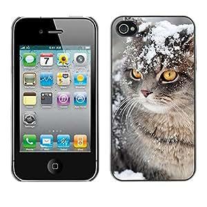 PC/Aluminum Funda Carcasa protectora para Apple Iphone 4 / 4S Snow Winter Manx Cat American Curl / JUSTGO PHONE PROTECTOR