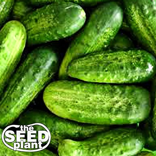National Pickling Cucumber Seeds - 50 Seeds NON-GMO (Best Pickling Cucumber Seeds)