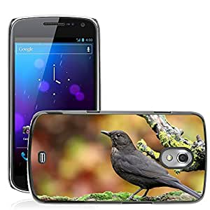 Super Stella Slim PC Hard Case Cover Skin Armor Shell Protection // M00146109 Blackbird Bird Autumn // Samsung Galaxy Nexus GT-i9250 i9250