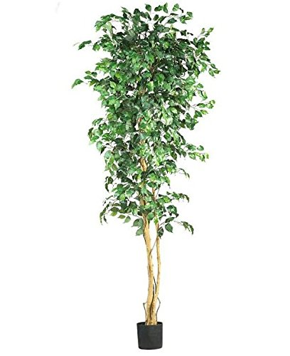 SKB Family 7' Ficus Silk Tree verdant measuring reproduction sturdy