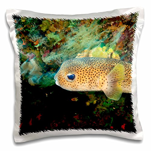 3dRose Pufferfish, Scuba Diving, Tukang Besi, Indonesia-AS11 SWS0429 - Stuart Westmorland - Pillow Case, 16 by 16-inch (pc_71998_1) by 3dRose