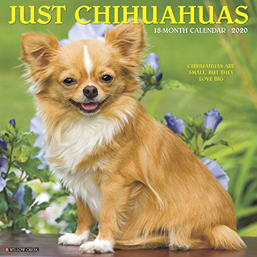 Just Chihuahuas 2020 Wall Calendar (Dog Breed Calendar) ()