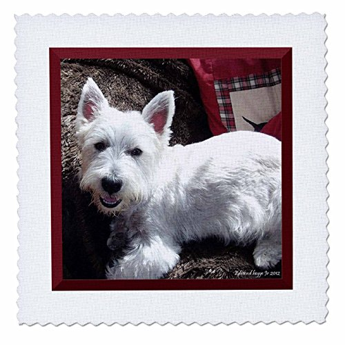 - 3dRose qs_39514_1 West Highland White Terrier Quilt Square, 10 by 10-Inch