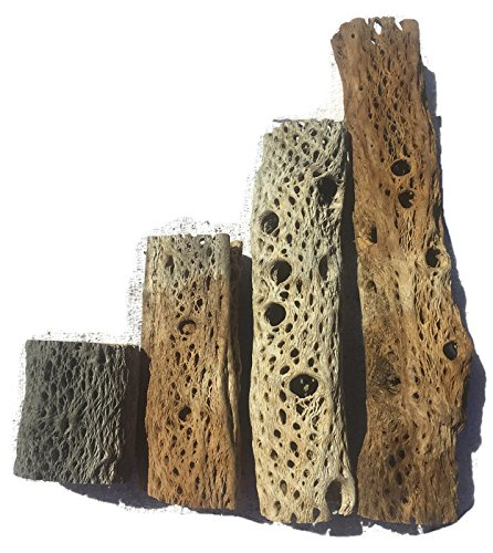 3, 6, 9, 12 Inch All Natural Teddy Bear Cholla Wood Extra Hollow Untreated Organic Aquarium Driftwood Decoration Chew Toy Shrimp Crab Pleco Cichlid Nano Tank Birds 1 or 5 Pieces (1 Piece, 12 inch)