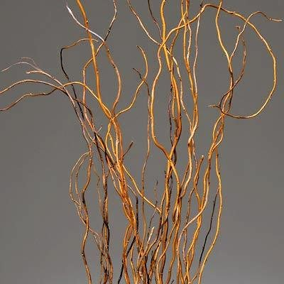 Fresh Natural Curly Willow Branches Long Stem about 10 fresh branches 3-4 feet in length -- Case of 100 Branches - Gold (Curly Willow Stems)