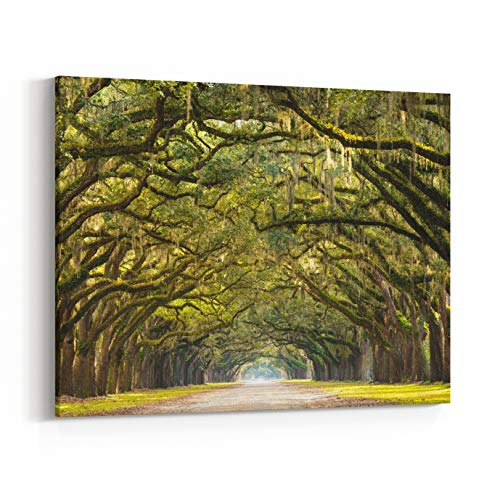 Rosenberry Rooms Canvas Wall Art Prints - A Stunning, Long Path Lined with Ancient Live Oak Trees Draped in Spanish Moss in The Warm, Late Afternoon Near Savannah, Georgia (20 x 16 inches)
