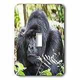 3dRose Danita Delimont - Primates - Africa, Rwanda, Volcanoes NP. Portrait of a silverback gorilla. - Light Switch Covers - single toggle switch (lsp_276525_1)