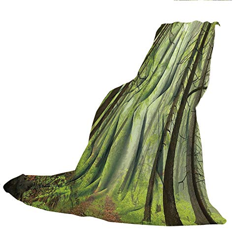 Alder Chair Outdoor (SCOCICI Blanket for Bed Couch Chair Fall Winter Spring Living Room,Outdoor,Trail Trough Foggy Alders Beeches Oaks Coniferous Grove Hiking Theme,Light Green Light Yellow,59.06