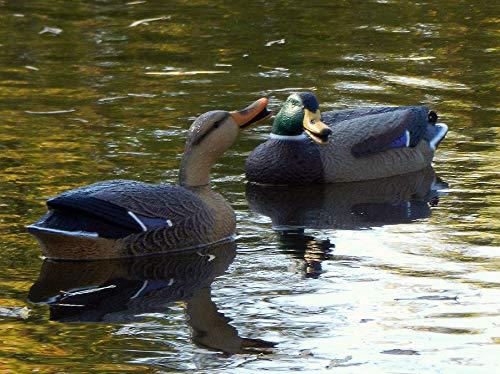 G&H Super Magnum Swivel Headed Mallard Duck Decoy (4 Drake/2 Hens)