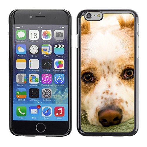 """Premio Sottile Slim Cassa Custodia Case Cover Shell // F00003164 chien mignon // Apple iPhone 6 6S 6G PLUS 5.5"""""""