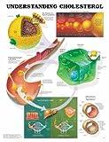Understanding Cholesterol Anatomical Chart, Anatomical Chart Company Staff, 1587797240