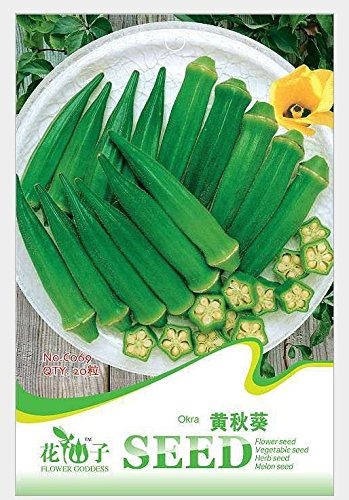 Okra seeds, new green health vegetables, green star okra - 20 particles