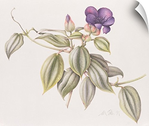 Tibouchina Urvilleana Princess Flower (Margaret Eden Wall Peel Wall Art Print entitled Glory Flower (Tibouchina Urvilleana) 1999)