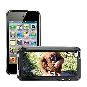 Hot Style Cell Phone PC Hard Case Cover // M00130044 Orangutan Ape Nature Orang Utan // Apple ipod Touch 4 4G 4th