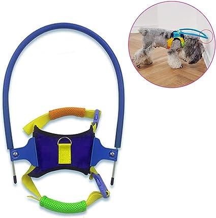 Haolv Blind Pet Anti-Collision Ring para Perros pequeños, con ...