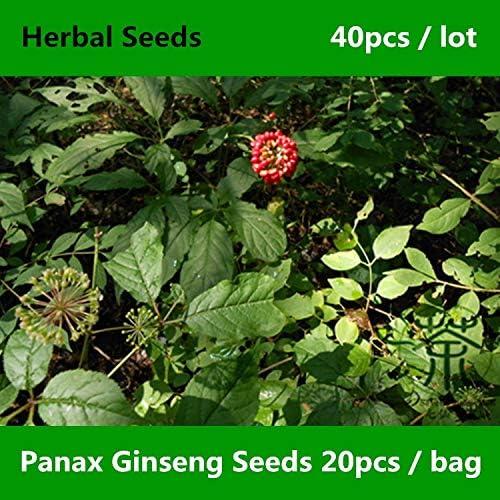 ShopMeeko Semillas: 40pcs ^^ Plazo Renshen Panax Ginseng ^^^^, al ...