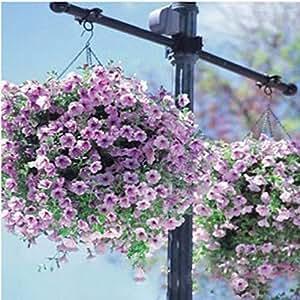 100 pedazos / Semillas Semillas Negro Petunia raras Negro flor de la petunia en las semillas de flor de Bonsai de interior para la planta de jardín de Bonsai