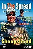 Sheepshead Fishing - In The Spread