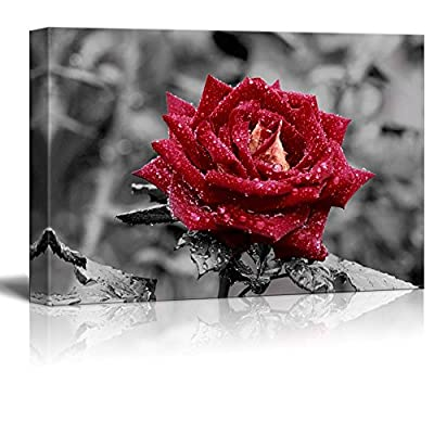 Canvas Prints Wall Art - Red Rose on Grey | Modern Wall Decor/Home Decoration Stretched Gallery Canvas Wrap Giclee Print. Ready to Hang - 32