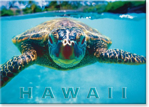 Hawaiian Art Collectible Refrigerator Magnet - Honu -