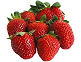 Organic Cambridge Favorite Strawberry 315 Seeds UPC 600188190748 + 1 Free Plant Marker