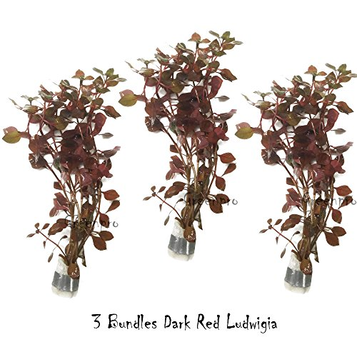 GreenPro 3 Bundles Dark Red Ludwigia Repens Live Aquarium Plants Package Freshwater Fish Tank by ()