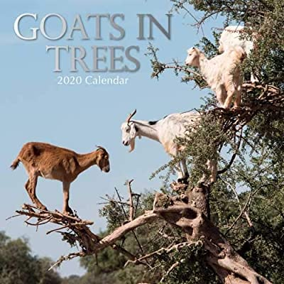 Goats In Trees Calendar 2020 Goats in Trees: 2020 Square Wall Calendar: 9781789780840