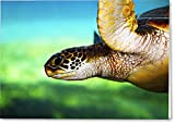 All Occasions Greeting Cards ''Green Sea Turtle'' (25 pack)