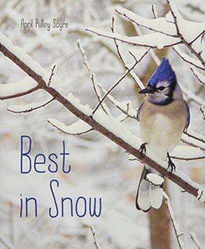 Best in Snow (Best Beaches In The World Photos)