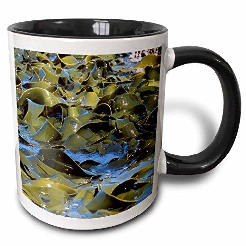3dRose mug_73284_4