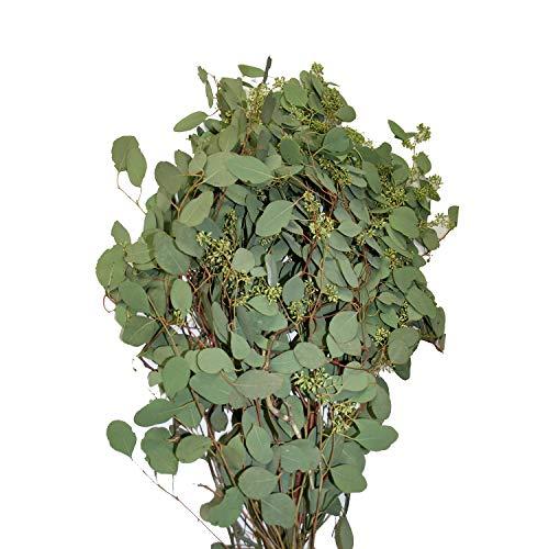 Farm Fresh Natural Seeded Eucalyptus - 40 Stems ()