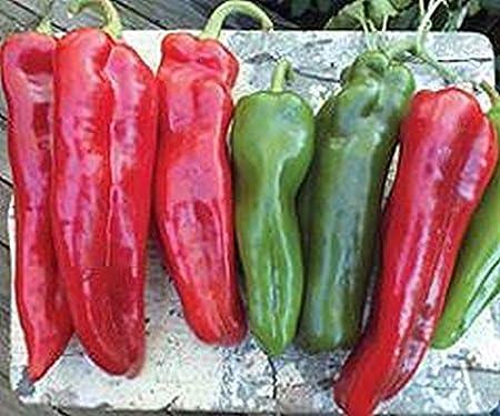 Giant Italian Roaster F1 Hybrid Sweet Pepper Seeds Very large Italian roaster!