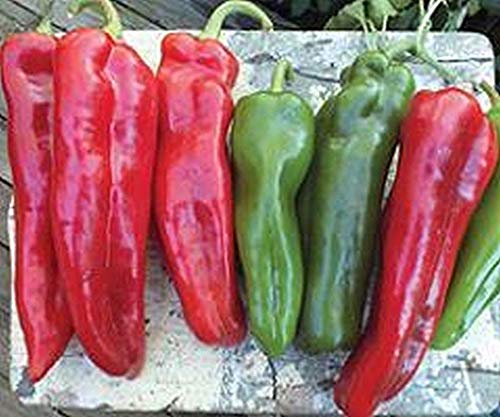 Giants Italian - Giant Italian Roaster F1 Hybrid Sweet Pepper Seeds - Very large Italian roaster!(25 - Seeds)
