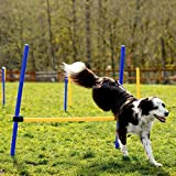CHEERING PET Dog Agility Equipment, 28 Piece
