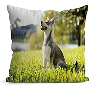 """Nine City Alaskan Klee Kai Puppy Sitting on Grass Looking up,Pillow Case Sofa Bed Throw Cushion Cover Decoration 32"""" X 32"""" 16"""