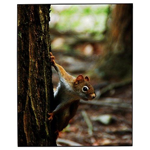 [Red Squirrel Photo Framed Print Jay El - 8