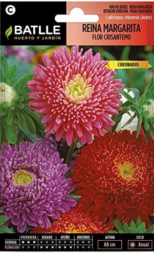 Semillas de Flores - Reina Margarita flor Crisantemo - Batlle: Amazon.es: Jardín