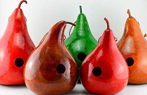 Gourd Birdhouse Garden Décor - Wren House - Red, Natural, Green, Brown, and Tan