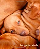 Hungarian Vizsla, TodaysPetPublishing, 1494453142