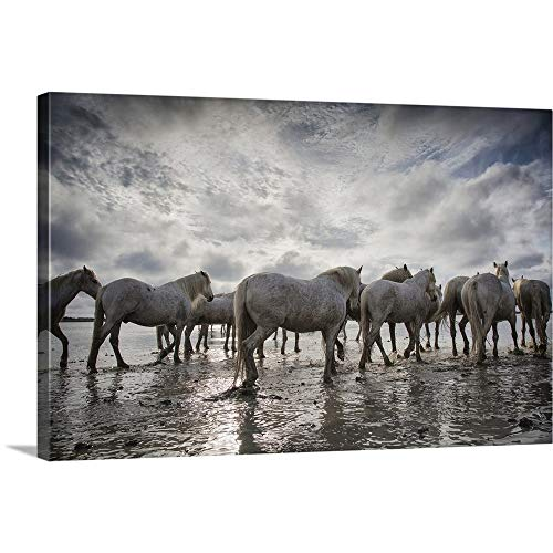 GREATBIGCANVAS Gallery-Wrapped Canvas Entitled The White Horses of The Camargue in The Water in The South of France by Scott Stulberg 60