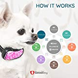 GoodBoy Small Rechargeable Dog Bark Collar for Tiny to Medium Dogs Weatherproof and Vibrating Anti Bark Training Device That is Smallest & Most Safe On Amazon - No Shock No Spiky