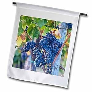 Danita Delimont–Italia–uvas listo para la cosecha de la Toscana Hills–banderas